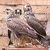 wild bird Ekaterinburg